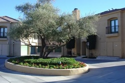 Luxury Central Residence pet friendly vacation rental in Mesa, Arizona